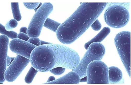 什么是宠物益生菌?宠物益生菌选购要注意什么?