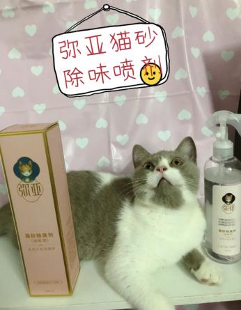 测评:猫砂除味帮手